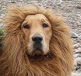 【Honesty Mouth】 大変身!! 犬 用 ライオン コスプレ グッズ かわいい おしゃれ ペット 着ぐるみ コスチューム かつら ペット用タオル セット