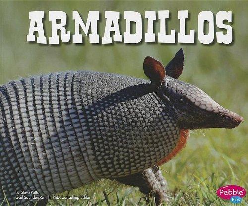 armadillos-north-american-animals