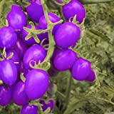 200 Pcs Purple Cherry Tomatoes Seed Balcony, Fruits Seed, Vegetables Potted, Plant Tomato Seeds