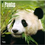 Pandas 2014 Square 12x12