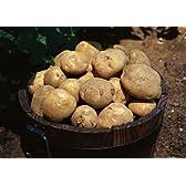 【平成24年産】北海道産「馬鈴薯」(じゃがいも)10kg 【送料込】