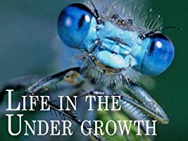 Attenborough: Life in the Undergrowth - Season 1