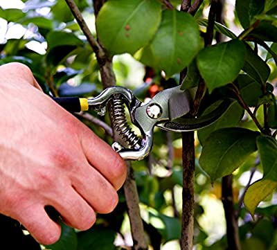 Jp Professional Pruning Shears