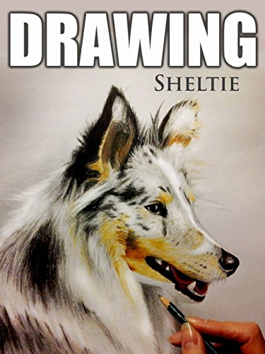 Clip: Drawing Sheltie