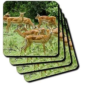 cst_9865_1 Kike Calvo Animals - The shores of Lake Nakuru in Kenya - Coasters - set of 4 Coasters - Soft
