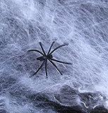 Dazzling Toys tele ragno & ragnatele per Halloween + ragni (D250) (pacco da 12)