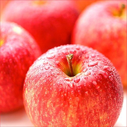 山形県産 りんご ご家庭用 サンふじ 5kg(生食可/約13玉-20玉入り/お届け時期により品種変更)