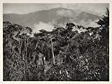1931 Rubber Trees San Carlos Mapiri Bolivia Mountains - Original Photogravure