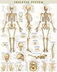 Skeletal System-Laminated