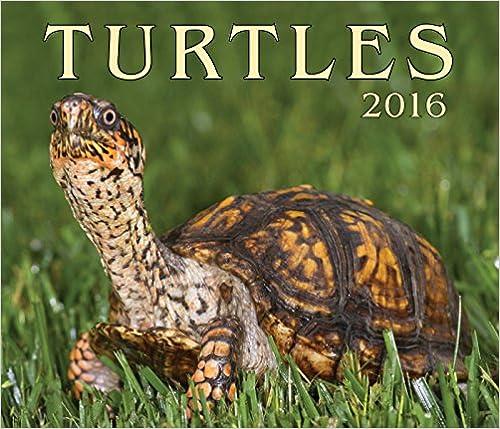 turtle calendar
