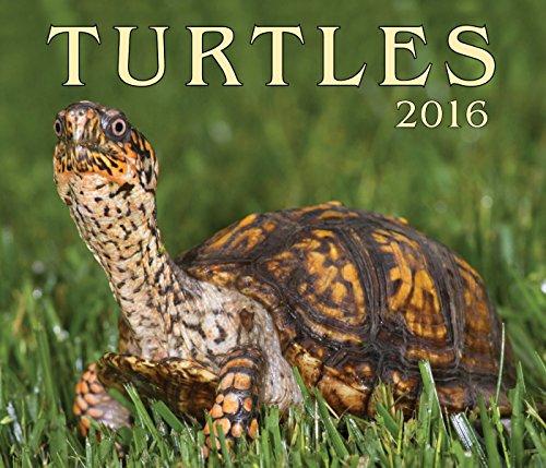 Turtles 2016