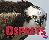 img - for Ospreys (Birds of Prey) book / textbook / text book