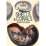 Shells & Corals. Muscheln & Korallen (Icons)