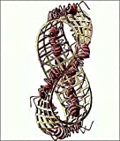 M.C. Escher (Mobius Strip II) Art Poster Print Poster Poster Print, 22x26