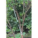 Worth Garden Long Reach Pruner,Long Arm Trimmer,Long Handled Pruning Shears, Ideal Picker & Trim Equipment