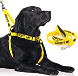 ADOPT ME Yellow Color Coded L-XL Non-pull Dog Harness and 2 4 6 Foot Padded Leash Sets (New Home Needed) Donate To Your Local Charity (Harness + 6 Foot Leash)