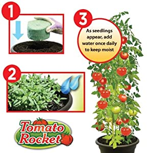 Tomato Rocket