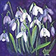 Charity Christmas Cards In Aid Of The British Red Cross - Snowdrops - Pack Of 8 Cards