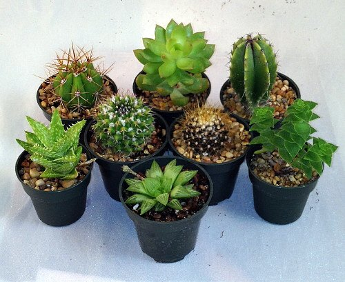 Cactus/Succulent Collection-8 Different Plants