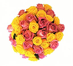 50 Mother\'s Day Farm Fresh Yellow and Pink Roses Bouquet By JustFreshRoses | Long Stem Fresh Yellow and Pink Rose Delivery | Farm Fresh Flowers