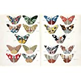 Butterflies (V&A Custom Print)