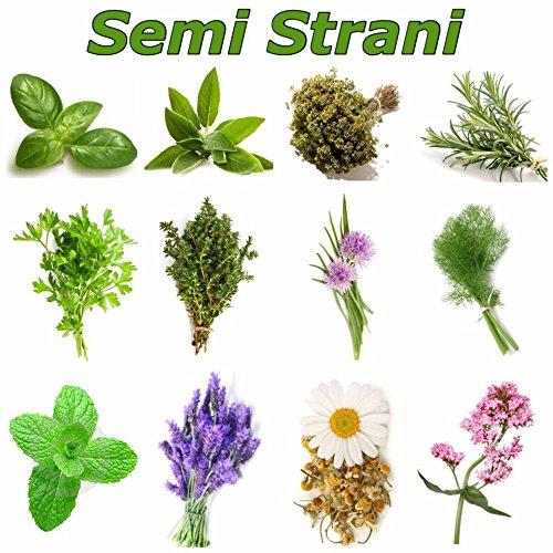 erbe-aromatiche-240-semi-in-12-varieta-piu-piccola-guida-alla-coltivazione-basilico-genovese-salvia-