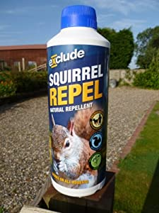 Best Squirrel Repellent Video Search Engine At
