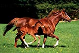 Horses poster mare