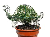 Tortoise 15 inches Long w/ Rosemary Topiary Frame, Handmade Animal Decoration (rosemary, 15 inches long)