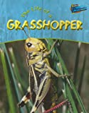 img - for Life of a Grasshopper (Life Cycles) book / textbook / text book