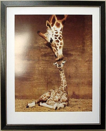 Framed Makulu Giraffe Baby Mother Giraffes Picture front-945323