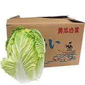 【箱売り】 白菜(はくさい・ハクサイ) 1箱(6本入り) 長野・大分県・熊本県・国産 【業務用・大量販売】 [その他]