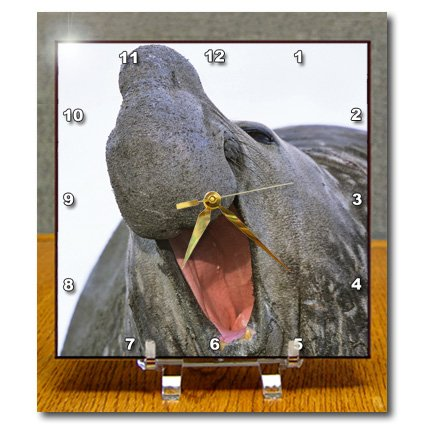 Dc_132257_1 Danita Delimont - Seals - Southern Elephant Seal Bull, South Georgia - An01 Mzw0059 - Martin Zwick - Desk Clocks - 6X6 Desk Clock back-393356
