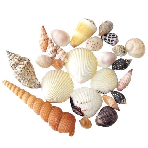 クラフト用 貝殻セット(貝殻25個入)