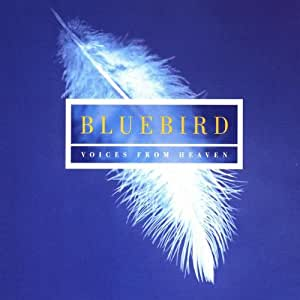 Bluebird - Music of Contemplation