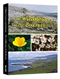 A Black Country Lad Explores; The Wildflowers of the Burren