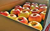長野県産 生産農家直送りんご 「名月」 中級ランク ご贈答&自家用向き 20~36玉 約10kg入り/箱