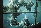 Image de Piranhas [Blu-ray]