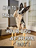 HOW TO TRAIN YOUR DOG AT HOME (PART 1)