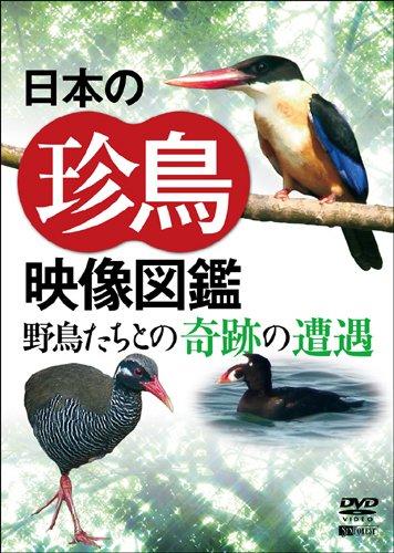 日本の珍鳥 映像図鑑 野鳥たちとの奇跡の遭遇