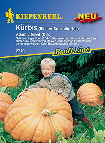 Amazon.de Pflanzenservice 910141 Kiepenkerl Kürbis Atlantic Giant