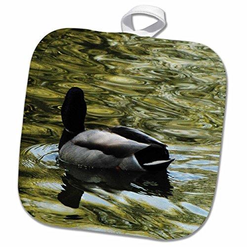 3dRose Krista Funk Creations Migratory Birds - Mallard Duck Swims Away - 8x8 Potholder (phl_18562_1)