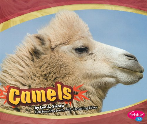 Camels (Asian Animals)