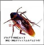 いたずら! ゴキブリ 100匹セット フェイク ジョーク グッズ チャバネゴキブリ 歓迎会 合コン パーティ 過激 ドッキリ イミテーション 大食い マダガスカル
