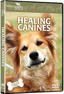 Healing Canines