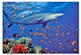 Melissa & Doug Shark 100 Piece Jigsaw Puzzle