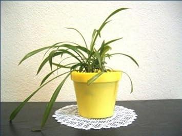 10x pot de de fleur h 94 mm diametre 110 mm plastique plastique jaune jardin m582. Black Bedroom Furniture Sets. Home Design Ideas