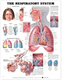 The The Respiratory System Anatomical Chart