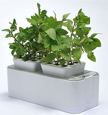 ZeroSoil Mini Indoor Garden - Self Watering Planter and Indoor Herb Garden