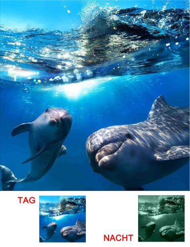 Startonight Canvas Wall Art Two Adorable Dolphins, Ocean USA Design for Home Decor, Dual View Surprise Artwork Modern Framed Ready to Hang Wall Art 31.5 X 31.5 Inch 100% Original Art (Halloween Decor Hobby Lobby)